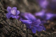 Fleurs tombées Photos libres de droits