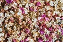 Fleurs tombées de rose et blanches sur le sol, fond abstrait photos libres de droits