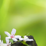 Fleurs tombées de tung photo libre de droits