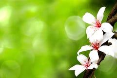Fleurs tombées de tung images libres de droits