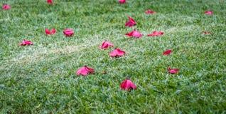 Fleurs tombées sur l'herbe Images stock