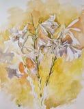 Fleurs très belles de lis peintes avec l'aquarelle Photographie stock libre de droits