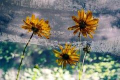 Fleurs transparentes Photographie stock libre de droits