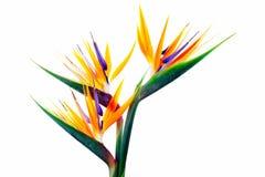 Fleurs tropicales 3 Photographie stock libre de droits