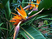 Fleurs tropicales Image stock