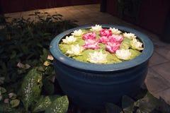 Fleurs tropicales Photographie stock libre de droits