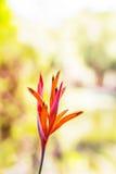 Fleurs tropicales de beau Photos libres de droits