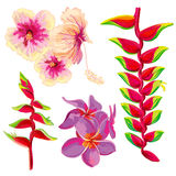 Fleurs tropicales de beau vecteur lumineux Photos stock