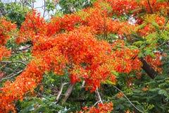 Fleurs tropicales de flowercoloré de guppy Image stock