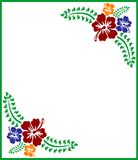 Fleurs tropicales de ketmie Images libres de droits