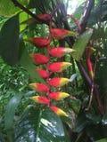 Fleurs tropicales en fleur Photos stock