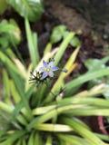 Fleurs tropicales en fleur, brauty du Sri Lanka Photographie stock libre de droits