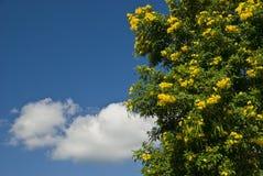 Fleurs tropicales et ciel bleu Image libre de droits