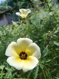 Fleurs tropicales jaunes dans le jardin photo stock