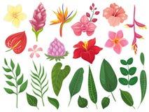 Fleurs tropicales Les tropiques fleurissent les feuilles, feuille d'été sur la branche et les feuilles tropicales d'usines sauvag illustration stock