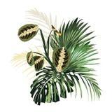 Fleurs tropicales, palmettes, feuille de jungle et plantes exotiques illustration stock