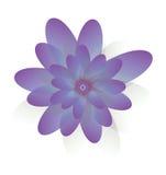Fleurs Tulip Purple Image stock
