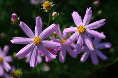 Fleurs un jour d'été image libre de droits