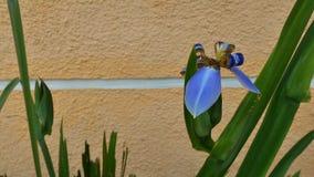 Fleurs urbaines Photo libre de droits