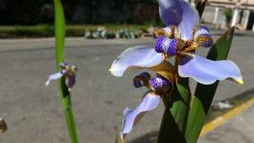 Fleurs urbaines de nature Photographie stock libre de droits
