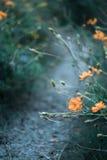 Fleurs vers la fin d'été Photographie stock