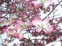 Fleurs vers le haut Photographie stock libre de droits