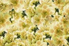 Fleurs vert jaune de roses de vintage Drapeau des fleurs Background collage floral Composition de fleur Images libres de droits