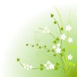 Fleurs vertes Photo libre de droits