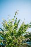 Fleurs vertes Image libre de droits