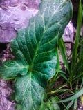 Fleurs vertes après la pluie à Corfou Image libre de droits