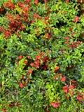 Fleurs vertes apr?s pluie photo libre de droits