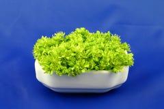 Fleurs vertes sur le bleu Photos stock