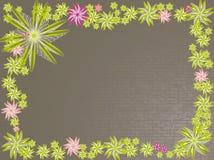 Fleurs vertes sur le mur Image libre de droits