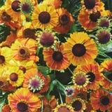 Fleurs vibrantes Image libre de droits