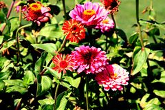 Fleurs vibrantes Images libres de droits