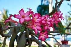 Fleurs vietnamiennes dans la ville de Nha Trang Images stock