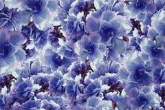 Fleurs violet-bleues de roses de vintage Drapeau des fleurs Background collage floral Composition de fleur Photo libre de droits