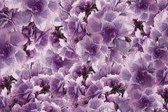 Fleurs violet-rose-brunes de roses de vintage Drapeau des fleurs Background collage floral Composition de fleur illustration libre de droits