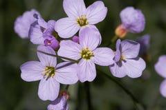 Fleurs violettes Photo stock