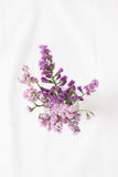 Fleurs violettes Images libres de droits