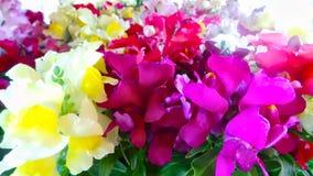 Fleurs violettes, blanches et jaunes Photo stock