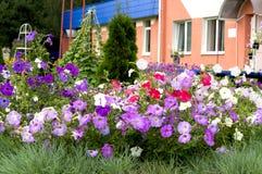 Fleurs violettes dans le parterre image stock