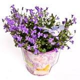 Fleurs violettes dans le vase photographie stock libre de droits
