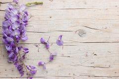 Fleurs violettes de glycine Photos stock
