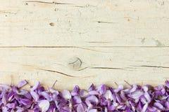 Fleurs violettes de glycine Image libre de droits
