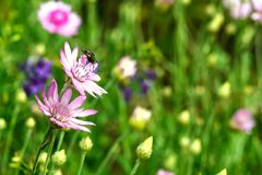 Fleurs violettes de pré sur un fond vert Image stock