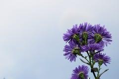 Fleurs violettes hautes étroites de beauté en parc images stock