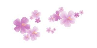 Fleurs violettes mauve-clair volantes d'isolement sur le fond blanc fleurs d'Apple-arbre Cherry Blossom Cmyk du vecteur ENV 10 Images libres de droits