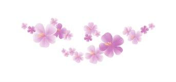 Fleurs violettes mauve-clair volantes d'isolement sur le fond blanc fleurs d'Apple-arbre Cherry Blossom Cmyk du vecteur ENV 10 Photos libres de droits