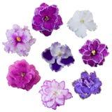 Fleurs violettes réglées Photos libres de droits